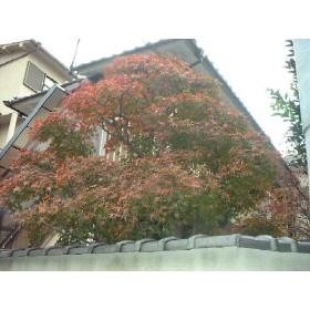 森田アパート外観写真
